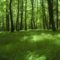 Lišćarske listopadne šume